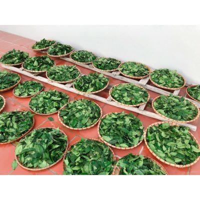 Bột trà xanh được làm từ lá trà nguyên chất